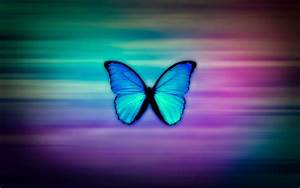 Colorful, Butterfly, Hd, Wallpapers