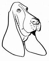 Coon Basset Bassett sketch template