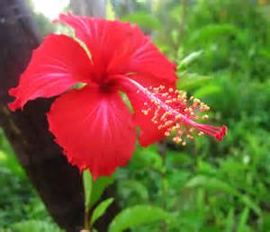 pink flower tree hibiscus jungle container