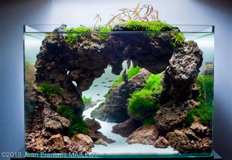 Freshwater Aquascaping Ideas by 2015 Aga Aquascaping Contest 489