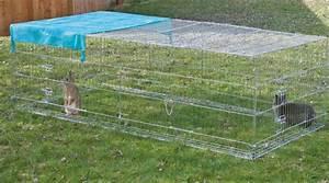 Kaninchenkäfig Für 2 Kaninchen : was man beim freilaufgehege f r kaninchen und hasen beachten sollte magazin ~ Frokenaadalensverden.com Haus und Dekorationen