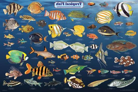 freshwater aquarium fish photo gallery