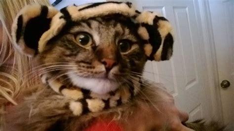 Big Cats Make Bad Pets