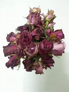 Blumen Der Liebe : blumen rosen verwelken altes rot der liebe stockfoto bild 42577524 ~ Orissabook.com Haus und Dekorationen
