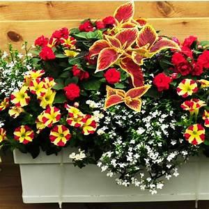 Jardiniere Fleurie Plein Soleil : 14 best jardini re fleurie pr t pousser images on ~ Melissatoandfro.com Idées de Décoration
