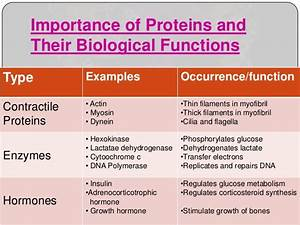 Types Of Protein Function