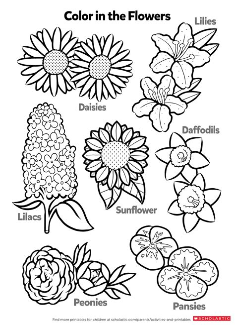 learn about flowers by coloring worksheets printables scholastic parents