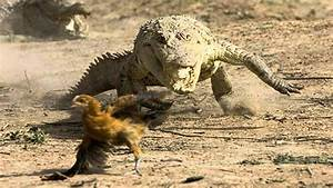 Evolution - Crocodile Man