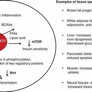 (PDF) Insulin sensitizers in 2013: New insights for the ...