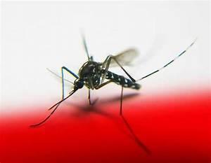 dengue curacao 2015