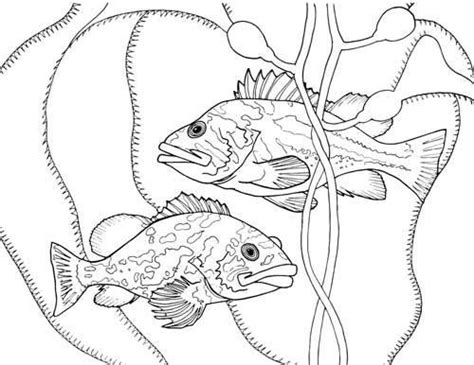 marine biologist coloring page coloring pages