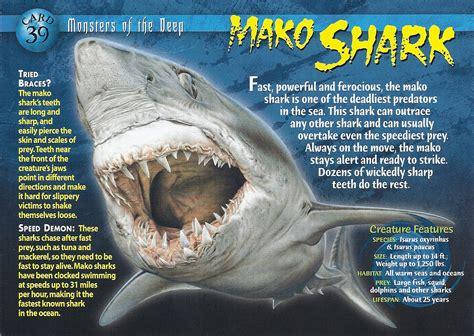 mako shark wierd nwild creatures wiki fandom powered