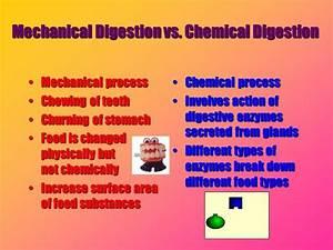 Mechanical Vs  Chemical Digestion