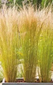 Welche Pflanzen Als Sichtschutz : ziergr ser im topf f r terrasse und balkon garten ~ Markanthonyermac.com Haus und Dekorationen