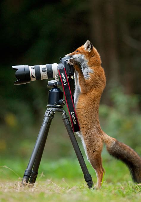 12096 professional photographs of animals 21 animals that want to be photographers bored panda