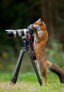 21 Animals That Want To Be graphers
