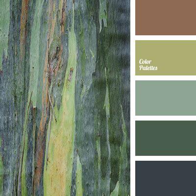 forest color color of forest color palette ideas
