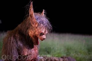 """Here's what the """"Late Phases"""" werewolf looks like ..."""