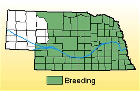 indigo bunting range map indigo bunting nebraska bird library