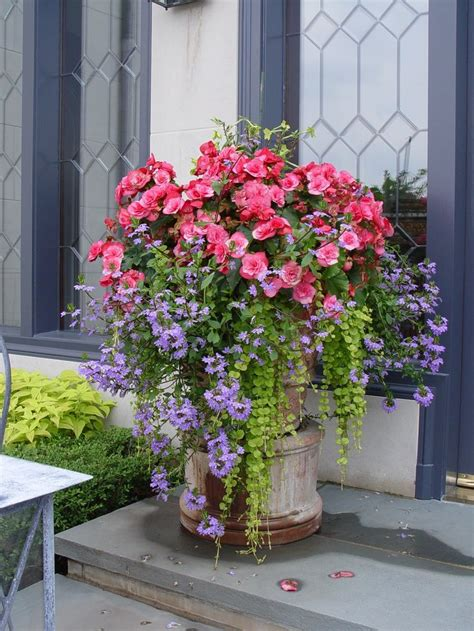 flowers in pots ideas 579 best images about gardening in containers on pinterest container plants fall containers