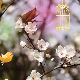 spring twitter birds facebook cover nature
