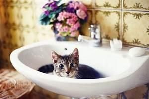 Backpulver Abfluss Hausmittel : abfluss reinigen abfluss verstopft diese hausmittel helfen ~ Bigdaddyawards.com Haus und Dekorationen