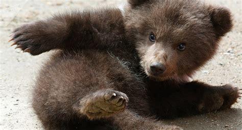 Police In California Rescue Baby Bear (video)