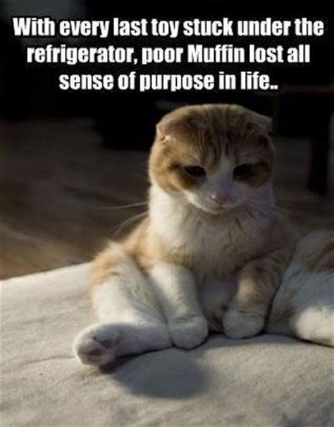 Sad Cat Meme - sad animal meme