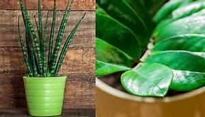 Pflegeleichte Pflanzen Für Die Wohnung : 9 pflegeleichte zimmerpflanzen die vieles mitmachen ~ Michelbontemps.com Haus und Dekorationen