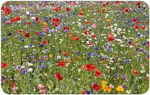 dans ma campagne 3 chez bouboulette With tapis champ de fleurs avec canapé de bureau