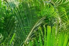 Palme Gelbe Blätter : goldfruchtpalme giftig oder ungef hrlich areca palme ~ Lizthompson.info Haus und Dekorationen