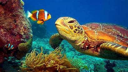4k Underwater Sea Nature Reef Turtle Barrier