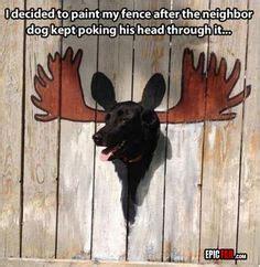 dog holes  fence images cut animals cutest