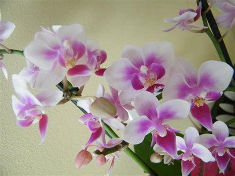 fiori per compleanni ilfilodelverde fiori ricevuti per il compleanno