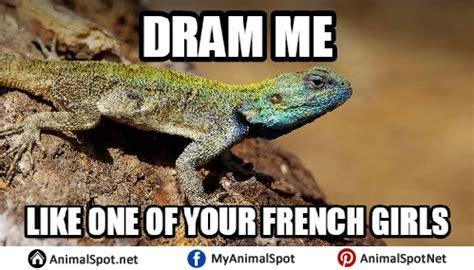 lizard memes