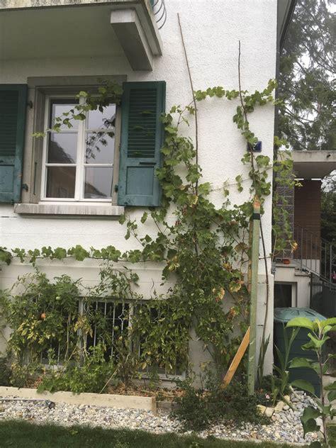 Mein Schweizer Garten Blog