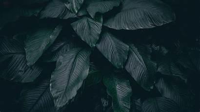 Dark Leaves Plant 4k Background Leaf Uhd