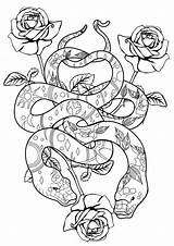 Coloring Pages Snakes Cool Adult Popular sketch template