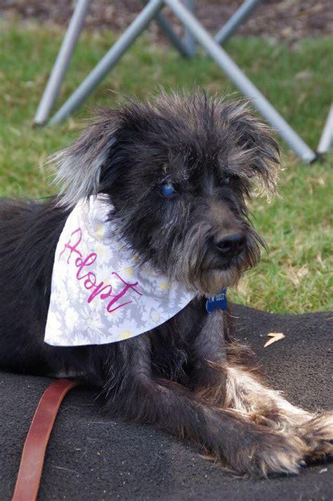 justice league  justice league dog rescue virginia