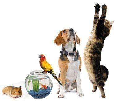 Pet Professional Guild Australia  Pet First Aid Program