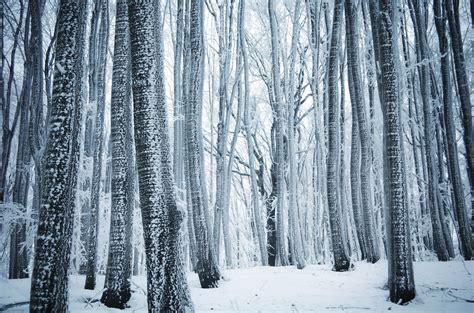 photo winter forest quiet outdoor park
