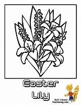 Coloring Lily Easter Flower Pages Lilies Yescoloring Luxurious sketch template