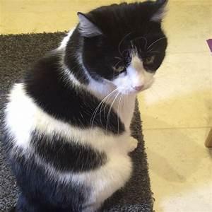 Tischläufer Schwarz Weiß : was ist das f r eine katzenrasse schwarz wei tiere katze haustiere ~ Frokenaadalensverden.com Haus und Dekorationen