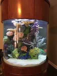 Pin By Jen Gardell On Fish Tank