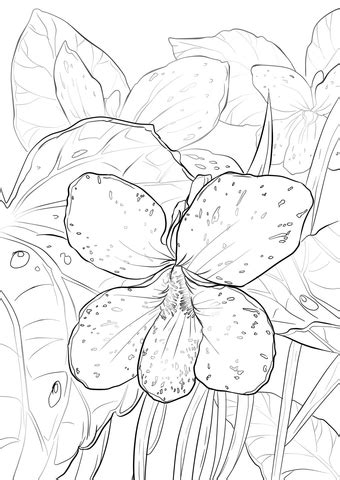 blue violet coloring page  printable coloring pages