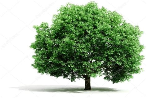 Tree Images No Background by 3d Tree Render On White Background Stock Photo