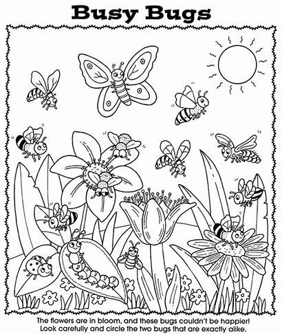 Coloring Bugs Pages Bug Preschool Worksheet Nature