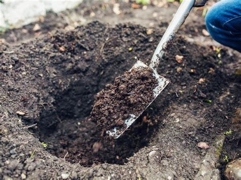 come piantare le in giardino piantare le in giardino