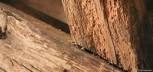 Produit Contre Les Termites : solution et traitement contre la m rule et les insectes bois ~ Melissatoandfro.com Idées de Décoration