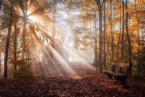Nature, Landscape, Park, Bench, Leaves, Sun, Rays, Fall, Trees, Mist, Sunlight, Wallpapers, Hd